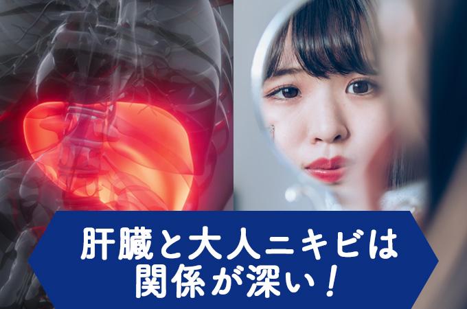 肝臓と大人ニキビは関係が深い!